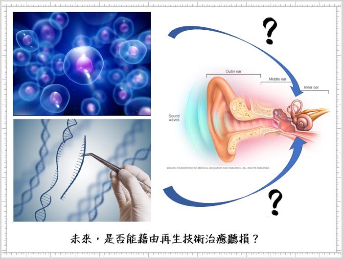 未來,是否能藉由再生技術治療聽損